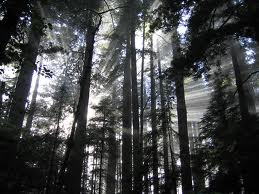 Stress Pictures redwood forest natural stress relief