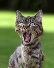 Stress Pictures shocked cat stress reaction