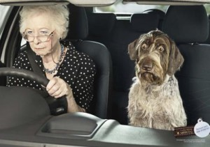 Stress Pictures stressed dog in passenger seat