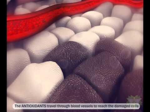 Antioxidants - vs - Free Radicals - Immune System