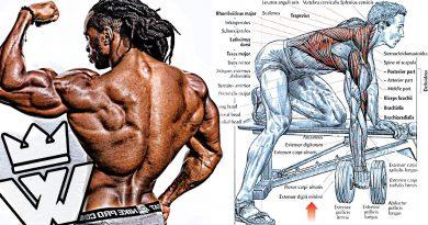 BODYBUILDING EXERCISES: How To Build Cobra BACK