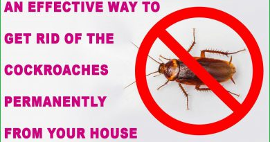 An Effective Way To Get Rid Of The Cockroaches Permanently From Your House