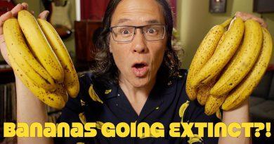 Bananas Going Extinct? GMO Bananas To Replace Them?