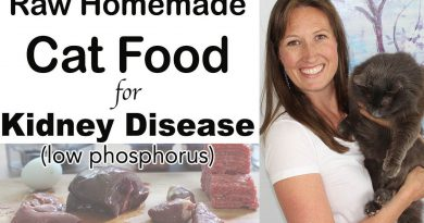 Homemade Cat Food for Kidney Disease Diet (raw, easy, inexpensive)