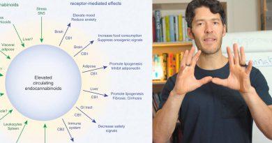 CBD, Cannabis & Endocannabinoid System Science VS Hype