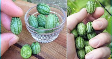 The Cucamelon Is The Cutest Summer Food You Should Be Eating