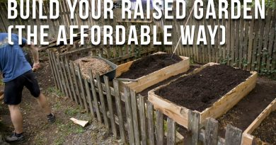 DIY Raised Garden Beds + Raspberries (my brother and I show you how to save $$)