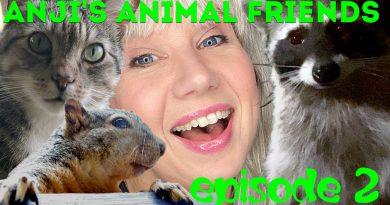 Anji's Animal Friends #2: Nutty Squirrel, Passive Possum + Peeping Raccoon