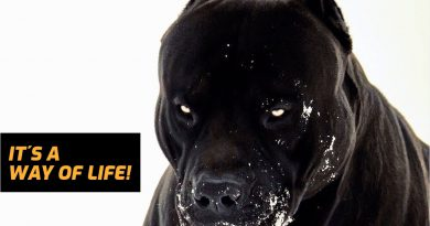 I AM A DOG - Bodybuilding Lifestyle Motivation