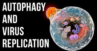 Autophagy as an Antiviral strategy