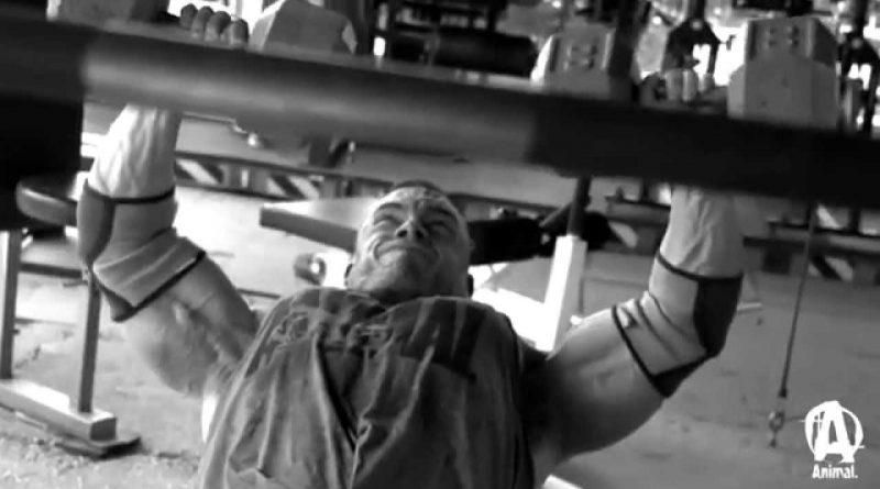 Bodybuilding Motivation Animals